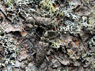 Camouflaged ground beetle among mossy cover - landscape color photo