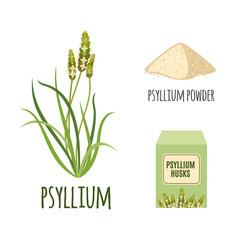 Superfood psyllium set in flat style.