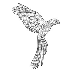 Parrot coloring book for adults vector