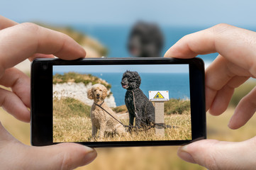 Man (photographer) is photographing dogs with smartphone.
