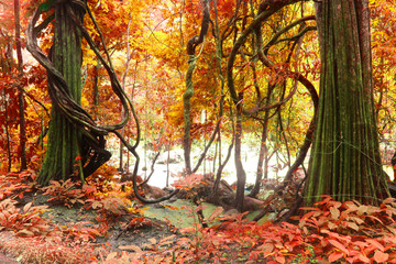 autumn tree, deep forest