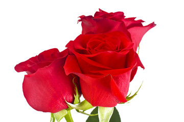 Beautiful Red Roses Flower Isolated on White