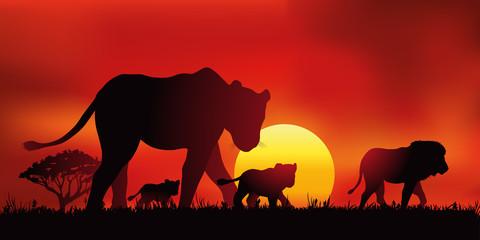 Lion Lionne Lionceaux -  Coucher de soleil