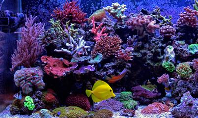 Aluminium Prints Under water Amazing Coral Reef Aquarium moment