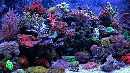 Foto auf Acrylglas Unterwasser Amazing Coral Reef Aquarium moment