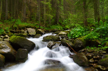 Mountain river in the green forest