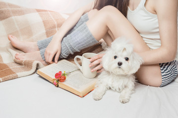 Sunny bedroom. Spending lazy weekend time with book and my favorite small dog. Young slim girl reading on the bed