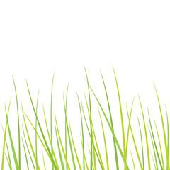 Nature -grass