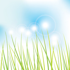Nature background -grass
