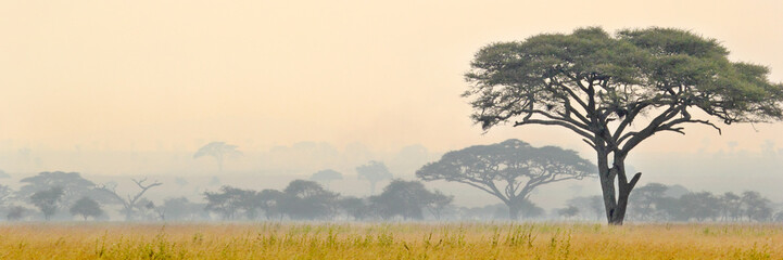 Fotobehang Afrika Beautiful scene of Serengeti National park