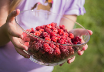 little girl holding a bowl with fresh, juicy raspberry in her hands