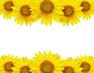 Sunflower border arrangement