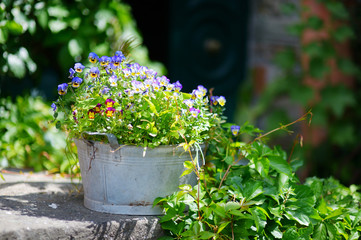 Variuos plants and flowers in colorful pots by a doorstep