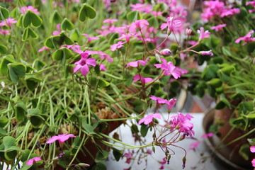 plant with fuchsia flowers