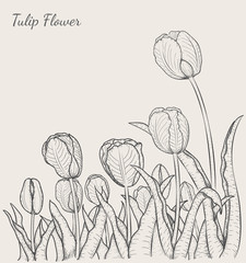 Tulip flower by hand drawing