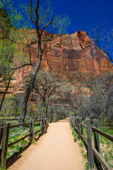 Amazing view of Zion national park, Utah