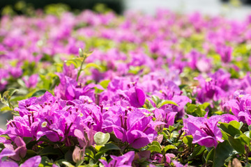 pink flower pattern 3460