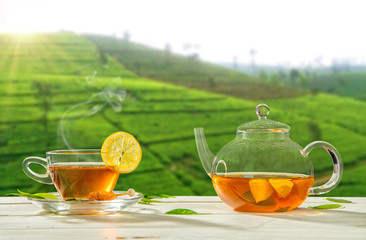 Cup of hot tea with plantation on background