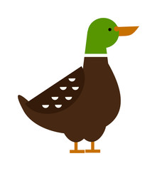 Cartoon duck farm animal character vector.