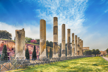 Fotomurales - Ancient columns of the Temple of Venus, Rome, Italy