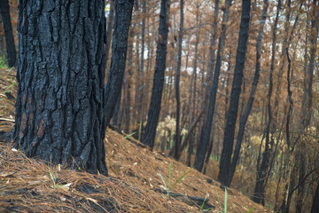 bosque después de incendio