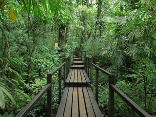 Wooden bridge in the jungle