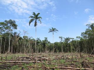 Deforestation in Peru Amazonia