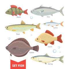 Freshwater fishes collection isolated on white background. Set Fish vector illustration.