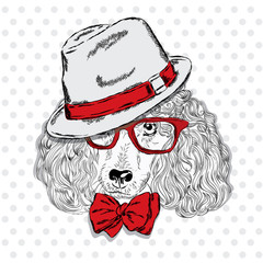 Poodle vector . Pedigree dog. Cute puppy. Poodle wearing a hat , sunglasses and a tie . Print . Hipster.