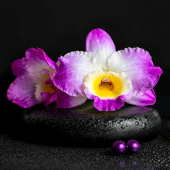 spa still life of purple orchid dendrobium with dew on black zen