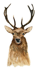 Deer. Watercolor drawing. Can be used for printing and design.