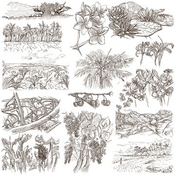 An hand drawn, freehand drawing, collection - Flowers