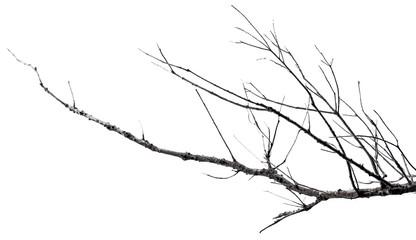 branche morte sur fond blanc
