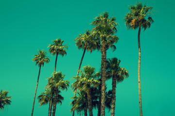 Fotobehang Los Angeles Tall palm trees against sky, green toned
