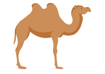 Vector image of a camel on a white background.