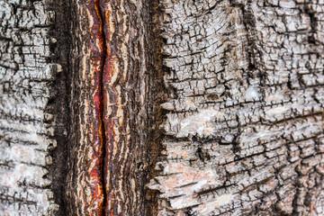 Closeup of damaged birch bark