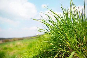 landscape outdoor green grass detail