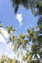 椰子の木と青空
