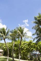 椰子の木と南国の風景