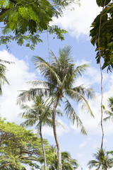 椰子の木と空 南国イメージ