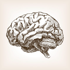 Human brain sketch style vector illustration