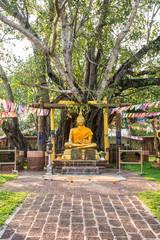 Buddha with the first bodhi tree Wat Sri Maha Pot, Thailand