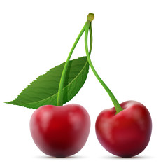 Pair of cherries fruits close up. Cherry with leaf isolated on white background. Qualitative vector illustration about cherry, agriculture, fruits, cooking, gastronomy, etc