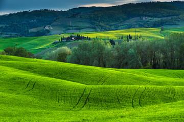 Green awakening spring in Tuscany.