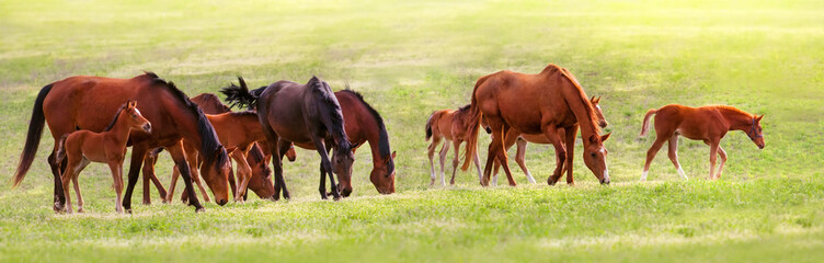 Horse herd on pasture at spring sunny day Wall mural