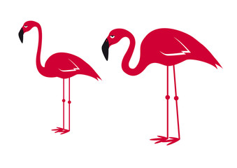 Pink flamingo vector. Flamingos on a white background. Cartoon character flamingo