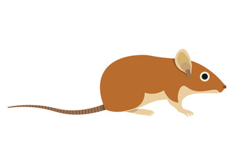 Field mouse vector illustration. field mouse isolated on white background.