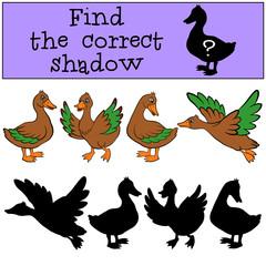 Children games: Find the correct shadow. Ducks.