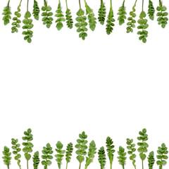 blank greeting card spring green leaves
