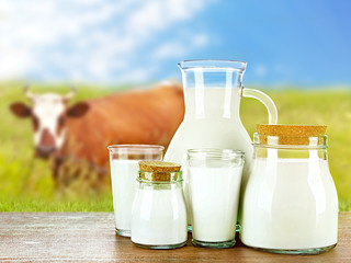 Pitcher, jars and glasses of milk on wooden table against cow and blue sky background